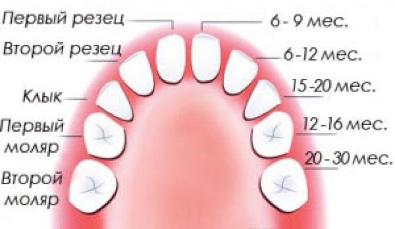 Вторые моляры зубы у детей