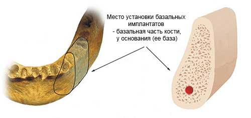 базальная кость