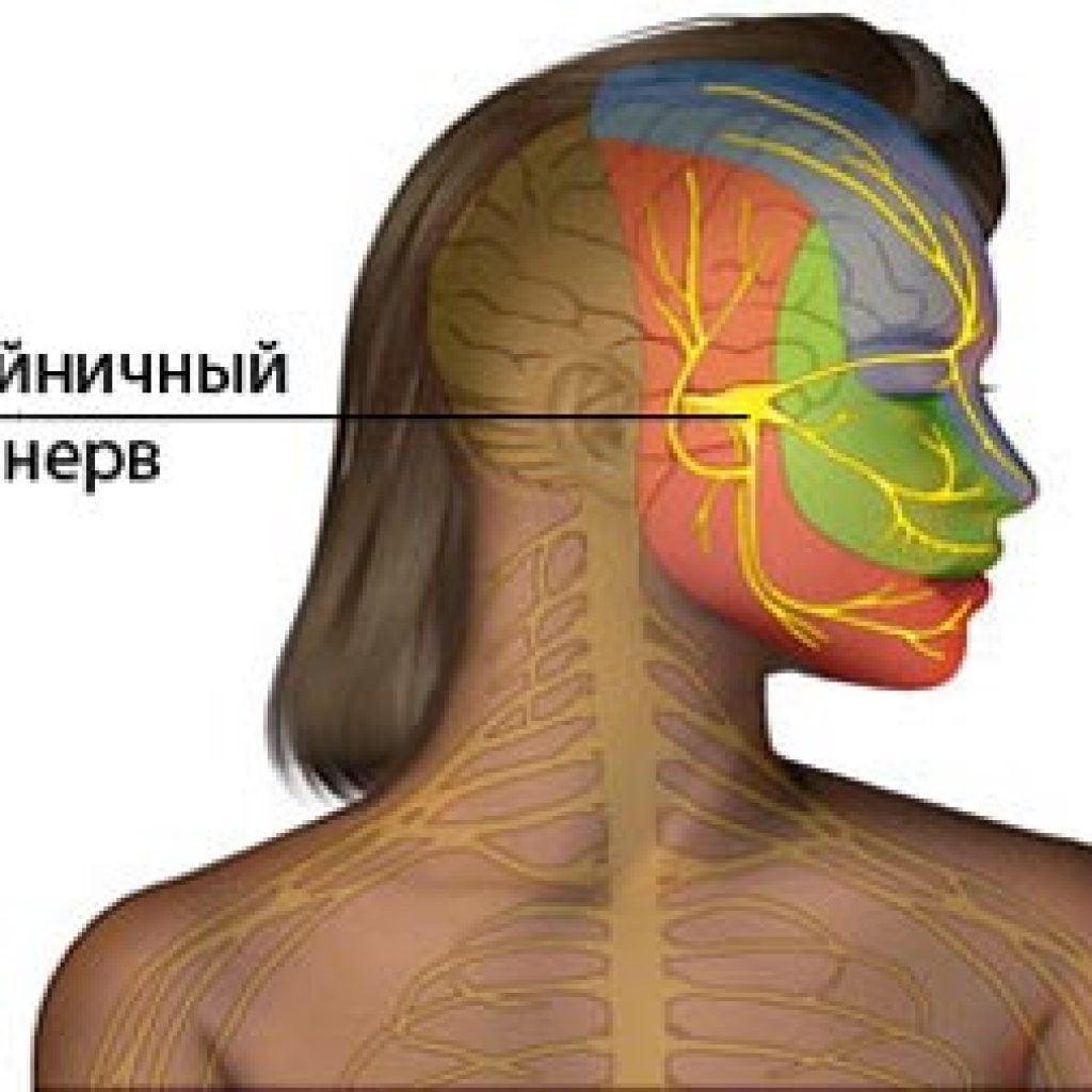 Затылочный нерв, воспаление: симптомы и лечение 85